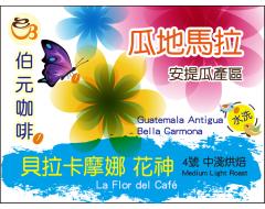 【伯元咖啡】中淺烘焙-瓜地馬拉-安提瓜-貝拉卡摩娜 花神【水洗】 半磅咖啡豆 手工挑豆 新鮮烘焙